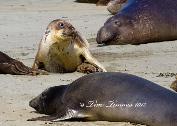 California Trip_46604272013 (1)-2