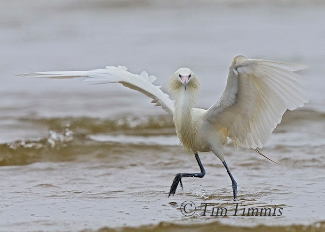 264_Galveston FeatherFest_04102015a-2