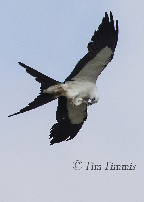 011_Dayton Kites_07192015-2