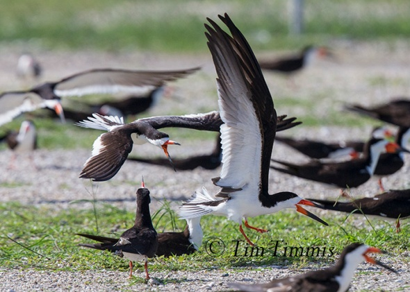 047_Dow Skimmers_06272015-2