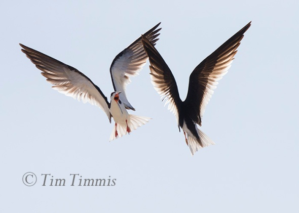 049_Dow Skimmers_06272015-2