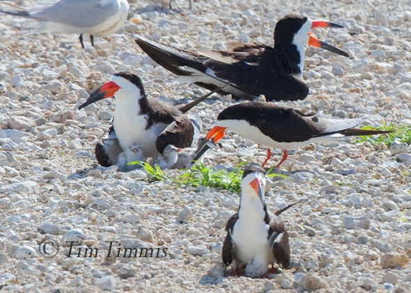 089_Dow Skimmers_06272015-2