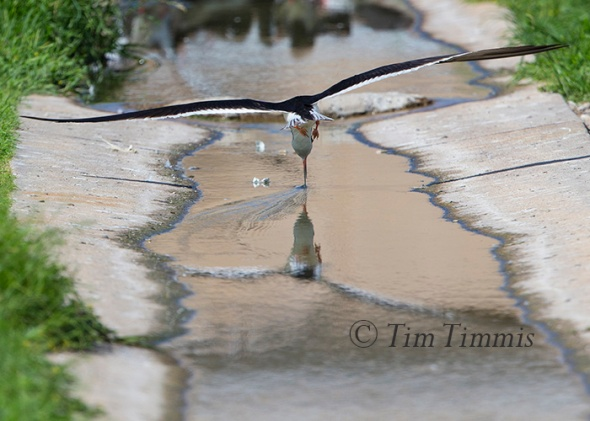 259_Dow Skimmers_06272015-2