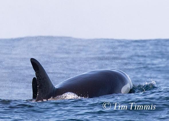 138_Monterey Bay_12122015-3