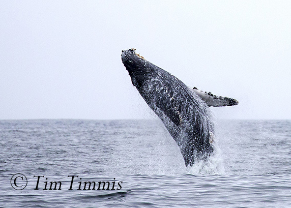 194_Monterey Whale Watching_07162016-3