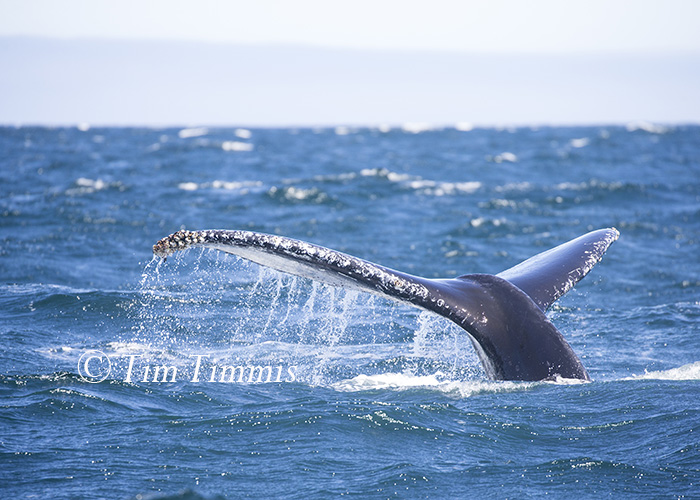 640_Monterey Whale Watching_07192016-2