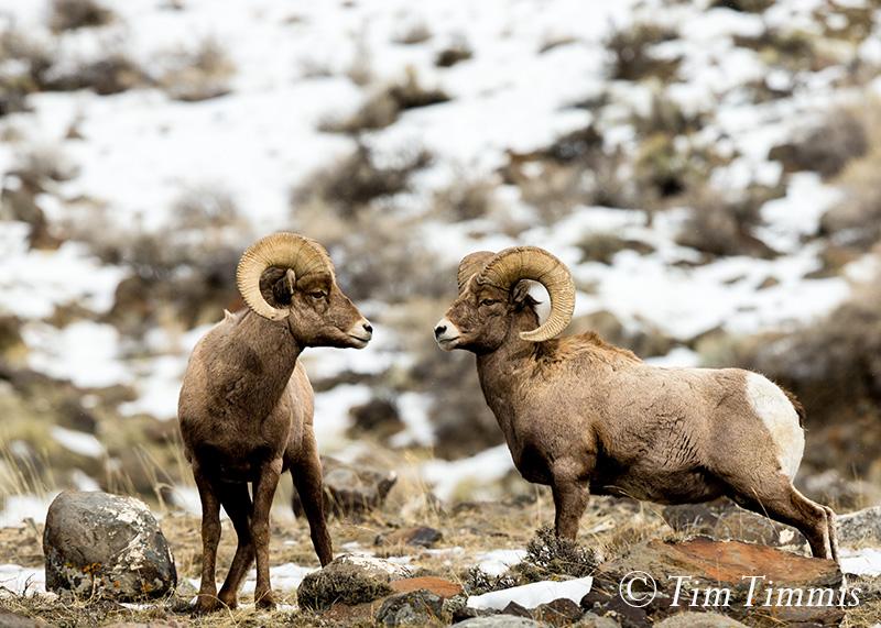159_Yellowstone_01222017-2
