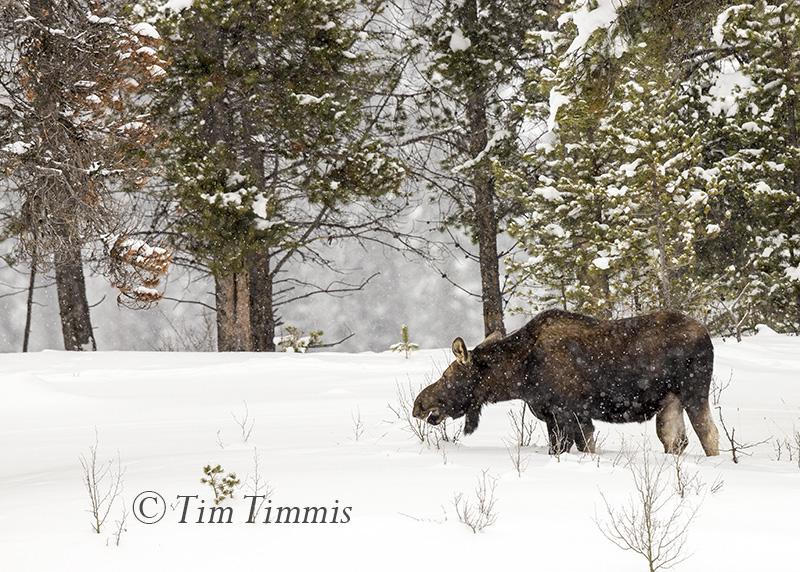 0832_Yellowstone_01212017-2