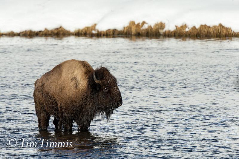 0982_Yellowstone_01152018-2