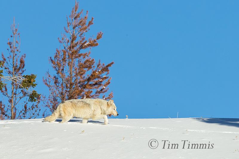 1034_Yellowstone_01152018-2