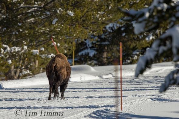 1573_Yellowstone_01152018-2