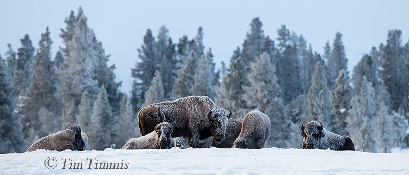 0303_Yellowstone_01162018-2