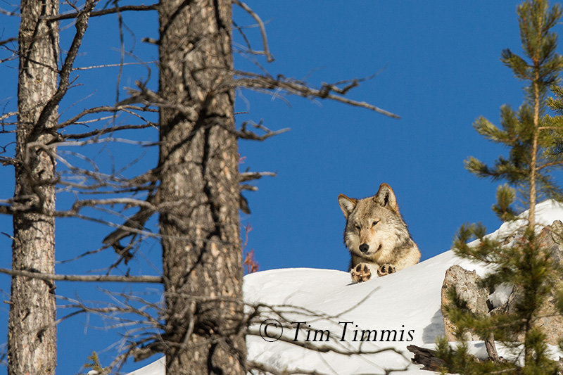 1582_Yellowstone_01162018-2