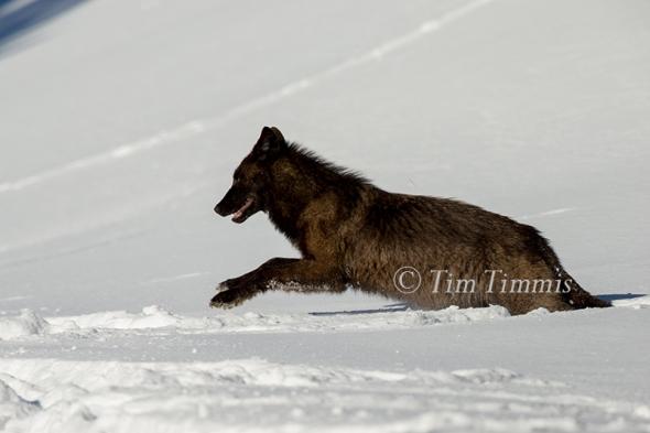 2098_Yellowstone_01162018-2
