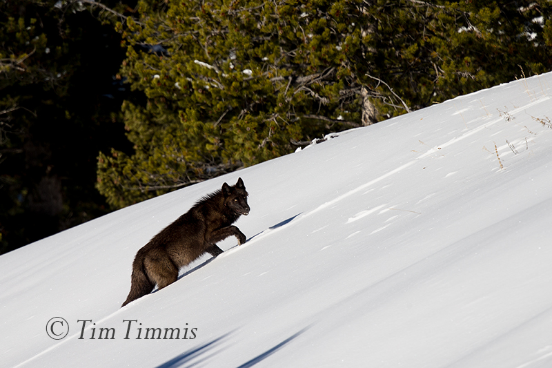 2148_Yellowstone_01162018-2