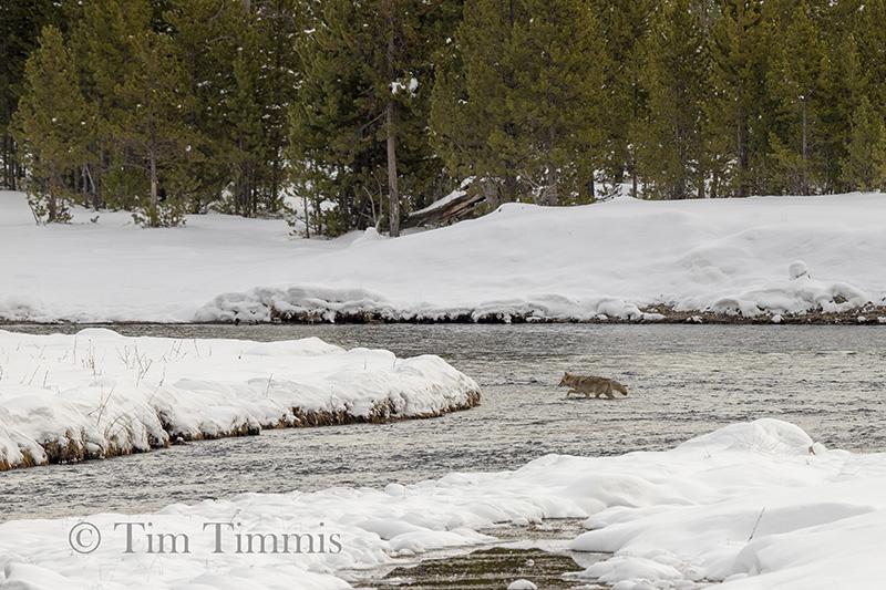 0788_Yellowstone_01272019-2
