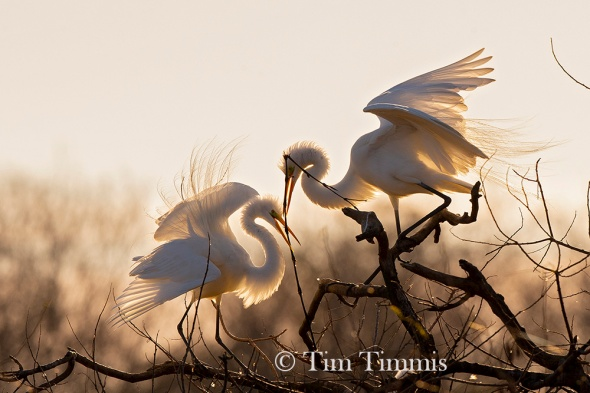 TimTimmis_greategrets_amateur-2