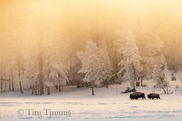 0096_Yellowstone_01292019-2