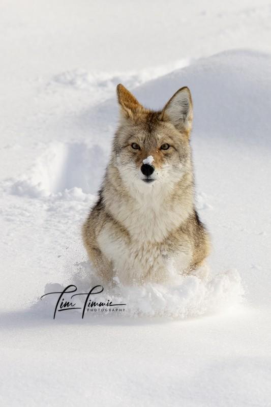 1257_Yellowstone_01272019-1